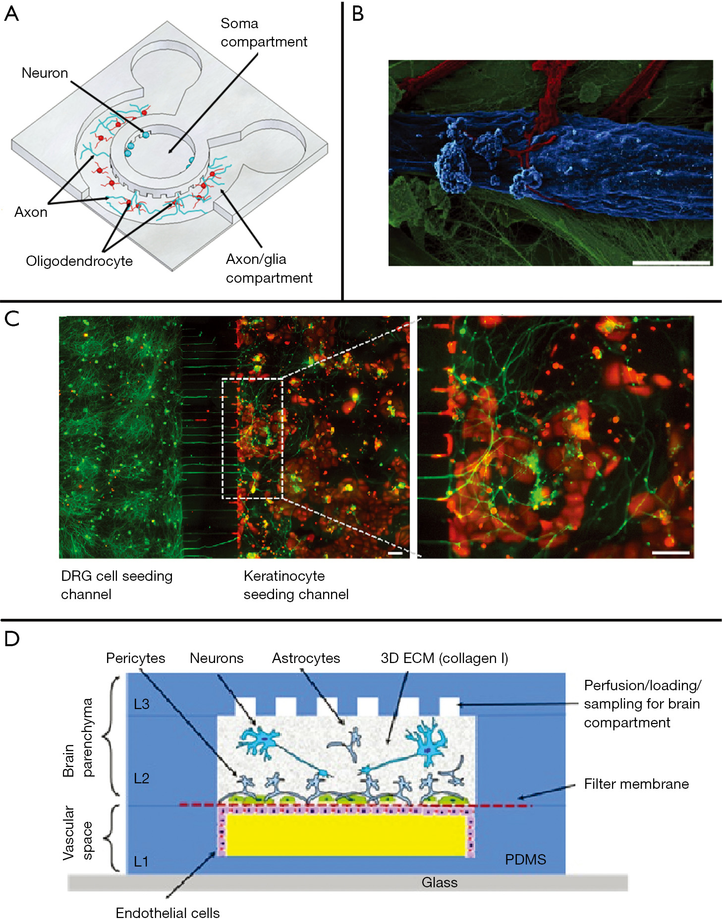Integrating Mass Spectrometry With Microphysiological Systems For Pics Photos 3d Plant Cell Diagram Labels A Schematic Illustration Of The Microfluidic Compartmentalized Cns Neuron Co Culture Platform View Circular Device Reproduced From Park J