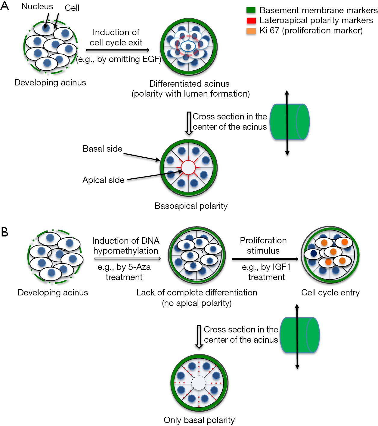 Microphysiological systems to study microenvironment-cell
